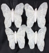 Feather Butterfly Ivory 7cm Croc Clip